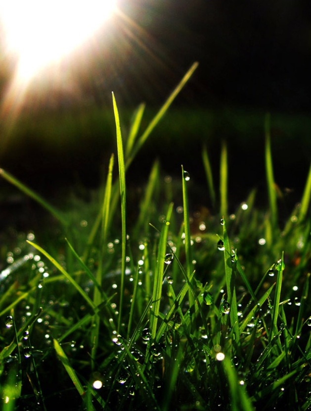 A photo of raindrops on blades of green grass with the sun flared behind it and reflecting in every drop.