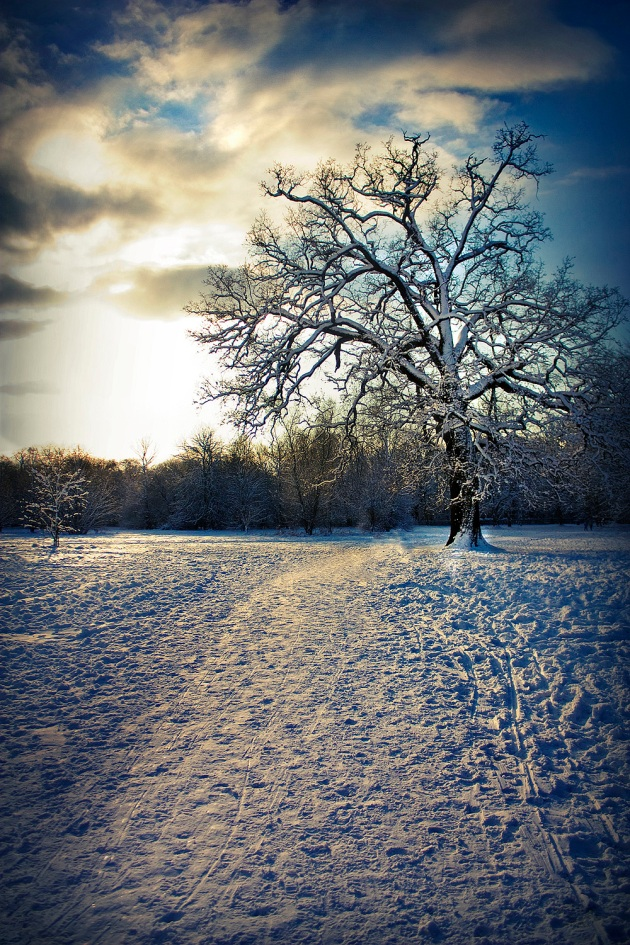 Tree in the snow in Cassiobury Park with a dramatic blue sky and clouds as the sun starts to go down.