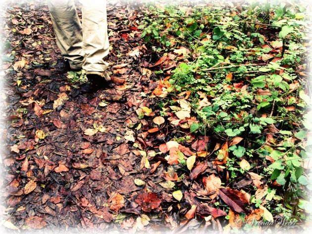Feet walking through autumn leaves.