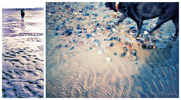 A diptych of Molly the dog running on the sand in Pevensy Bay