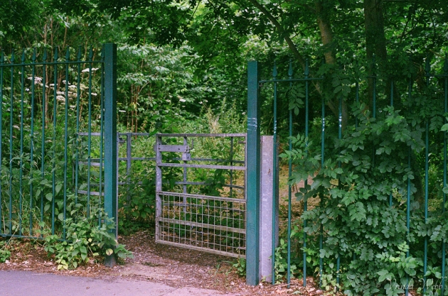 Gate to the woods, expired Fujifilm, taken with Pentax K1000