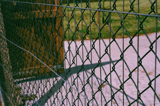 Chain link fence, taken on expired Kodak film, with Pentax K1000