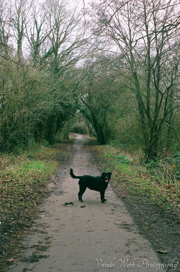 Molly on Cuckoo trail